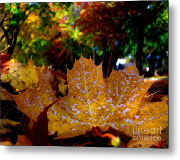 Year After Year Metal Print