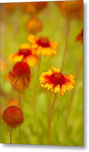 Indian Blanket Coneflower Metal Print