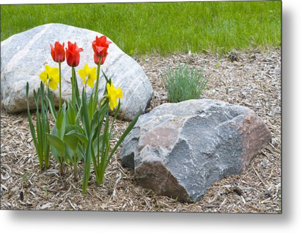Yellow And Red Tulips With Two Rocks Metal Print