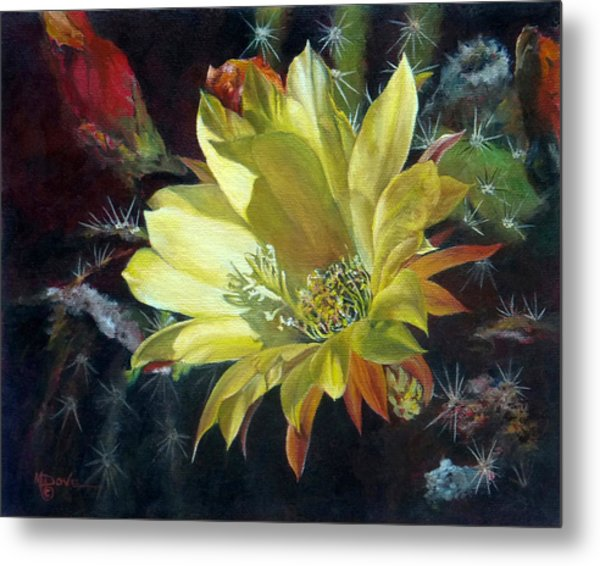 Yellow Argentine Giant Cactus Flower Metal Print