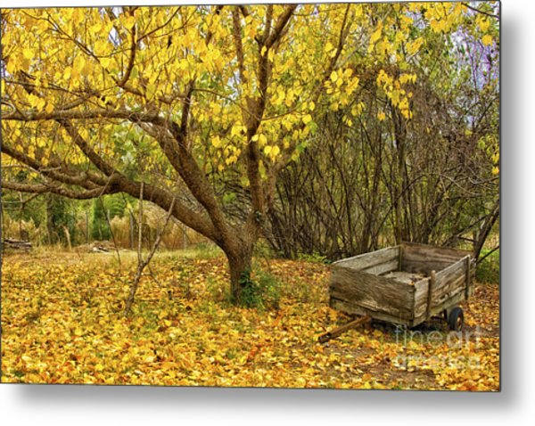 Yellow Autumn Leaves And Wooden Wagon Metal Print