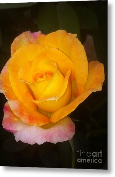 Yellow Beauty Metal Print