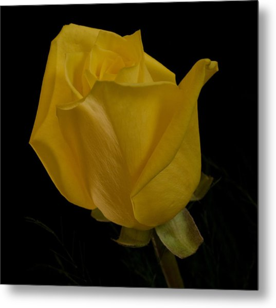 Yellow Bud Metal Print by Nancy Edwards