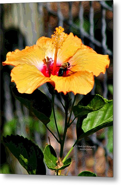 Yellow Bumble Bee Flower Metal Print