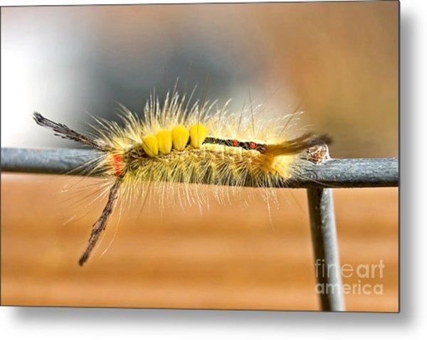 Yellow Caterpillar Metal Print
