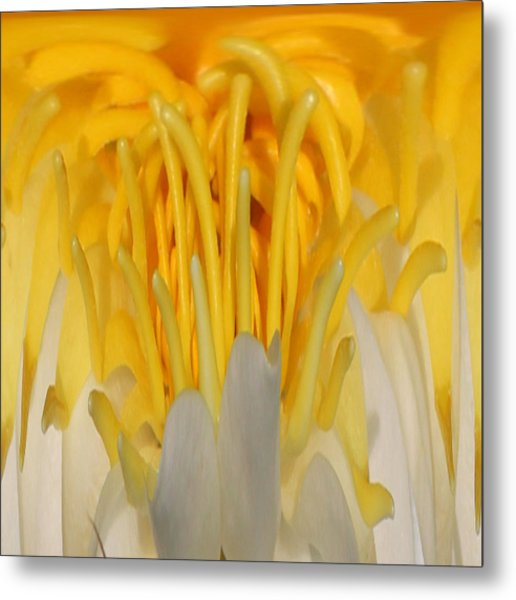 Metal Print featuring the photograph Yellow Center 1 by Jim Baker