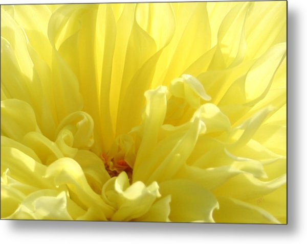 Yellow Dahlia Burst Metal Print