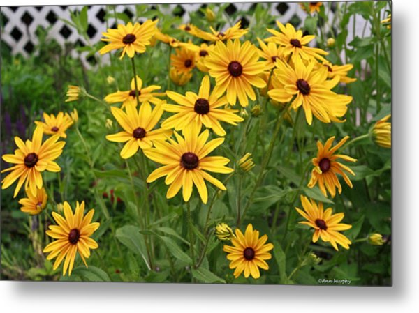 Yellow Daisy Flowers #2 Metal Print