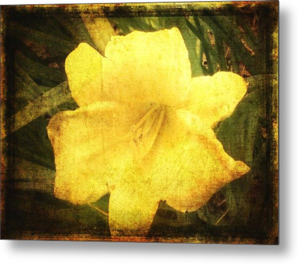 Yellow Daylily  Metal Print