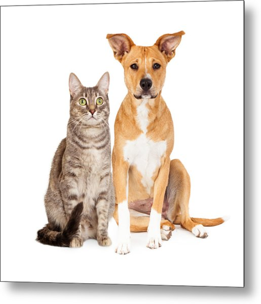 Yellow Dog And Tabby Cat Metal Print