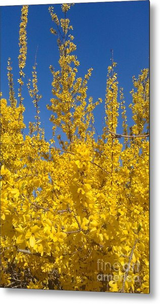 Yellow Explosion Metal Print