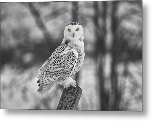 Yellow Eyes Metal Print