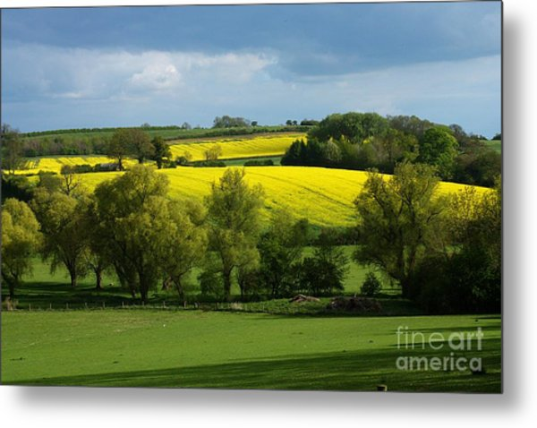 Yellow Fields In The Sun Metal Print