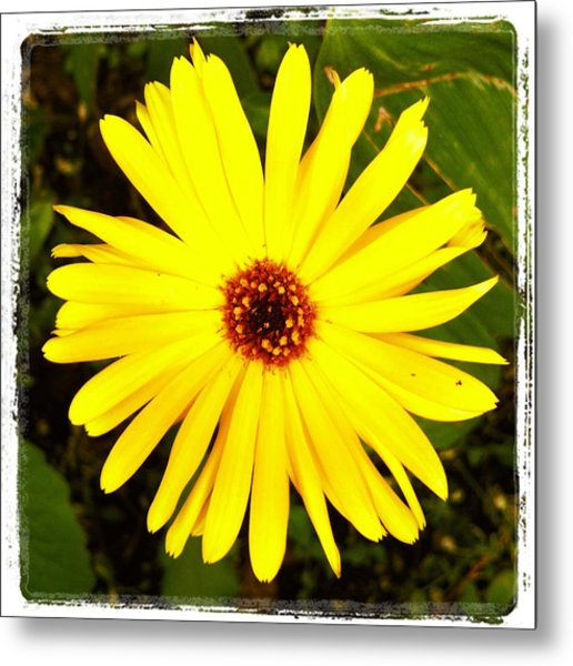Yellow Flower 12 Metal Print