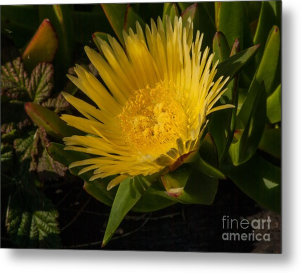 Yellow Flower 1.7103 Metal Print by Stephen Parker
