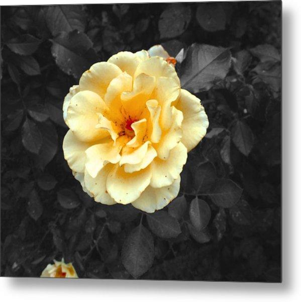 Yellow Flower Metal Print by Felix Concepcion