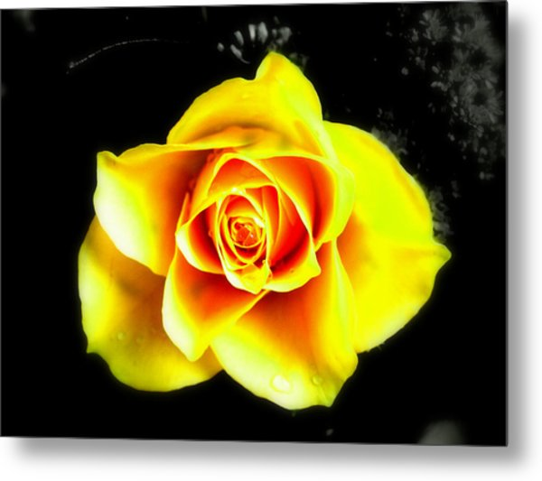 Yellow Flower On A Dark Background Metal Print
