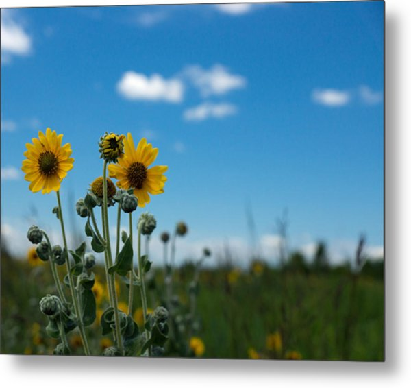 Yellow Flower On Blue Sky Metal Print