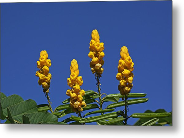 Yellow Flowers Against Blue Sky Metal Print