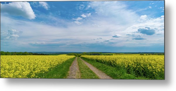 Yellow Flowers In A Field Metal Print by Wladimir Bulgar/science Photo Library