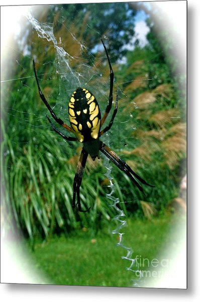 Yellow Garden Spider Metal Print by Linda Walker