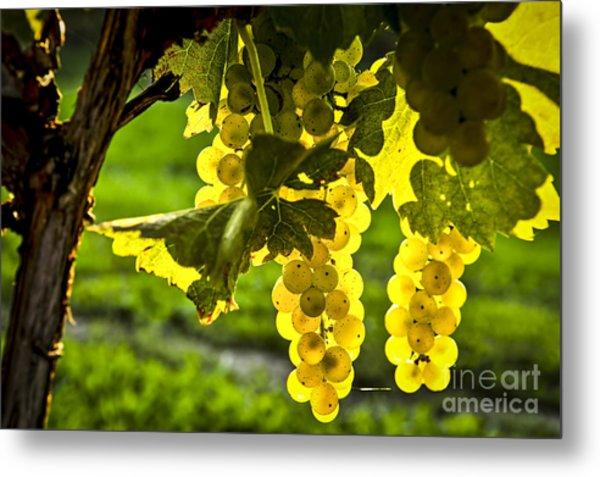 Yellow Grapes In Sunshine Metal Print