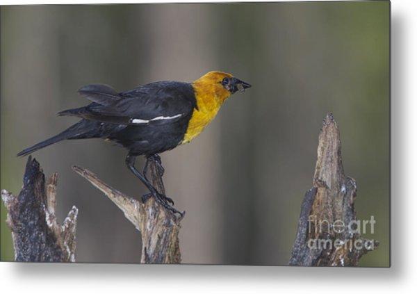 Yellow Headed Bird Metal Print