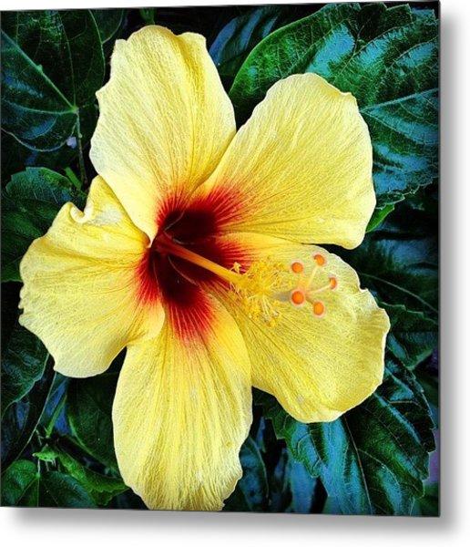 Yellow Hibiscus 2 Metal Print