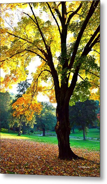 Yellow Highlights Metal Print