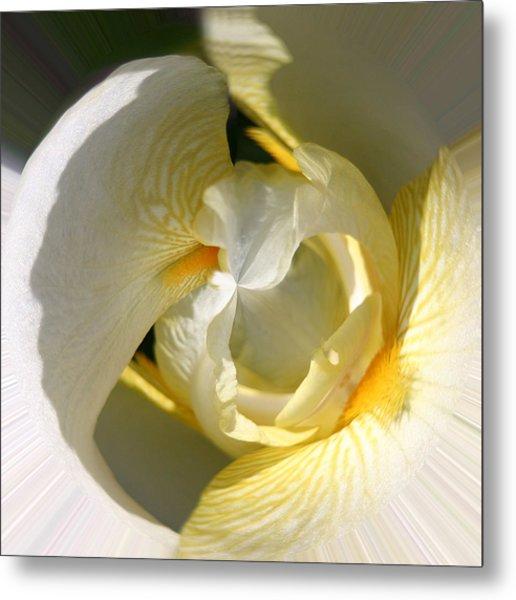 Yellow Iris 103 Metal Print