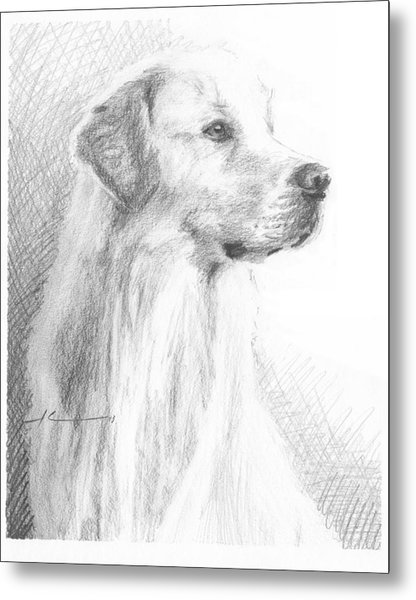 Yellow Labrador Show Dog Pencil Portrait Metal Print by Mike Theuer