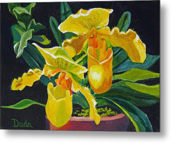 Yellow Lady Slippers Metal Print