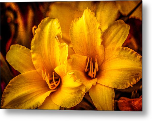 Yellow Lillies Metal Print