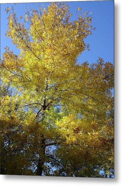 Yellow Maple Tree Metal Print by Michel Mata