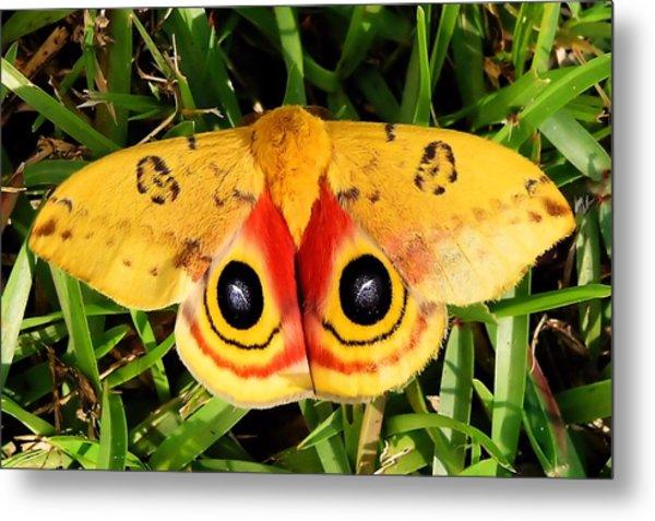Yellow Moth Metal Print