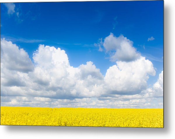 Yellow Mustard Fields Under A Deep Blue Sky Metal Print