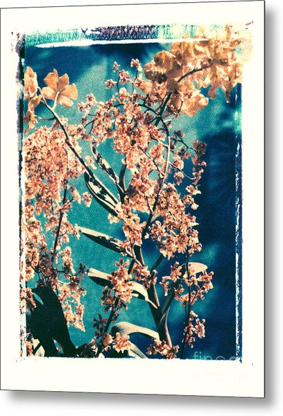 Yellow Orchids Metal Print by Deborah Gray Mitchell