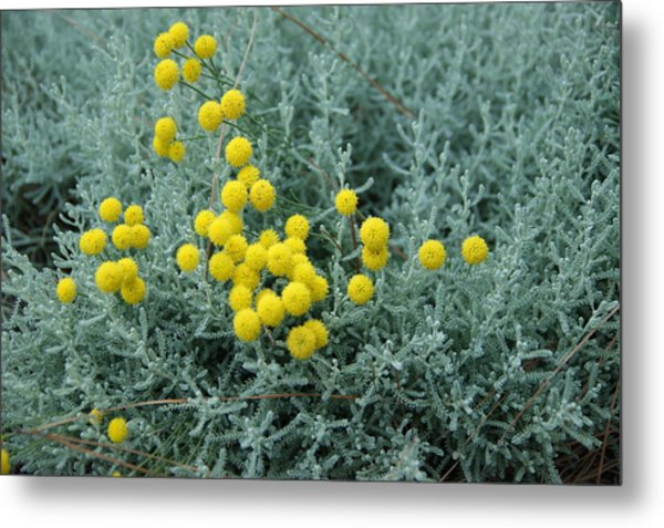 Yellow Pompoms Metal Print by Leigh Ann Hartsfield
