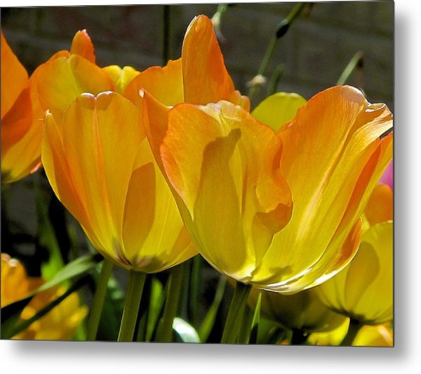 Metal Print featuring the photograph Yellow by Ralph Jones