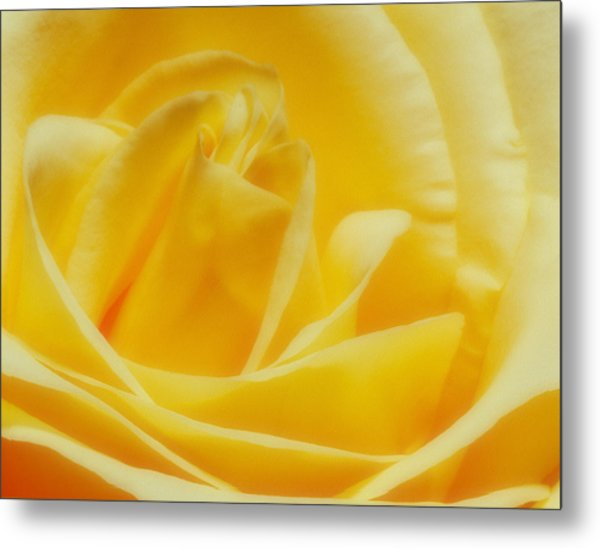 Metal Print featuring the photograph Yellow Rose by Bob Coates