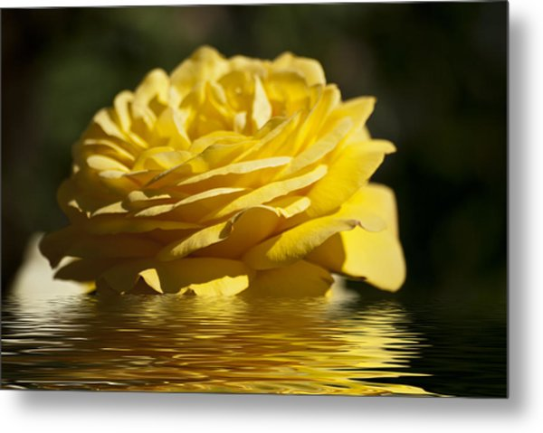 Yellow Rose Flood Metal Print