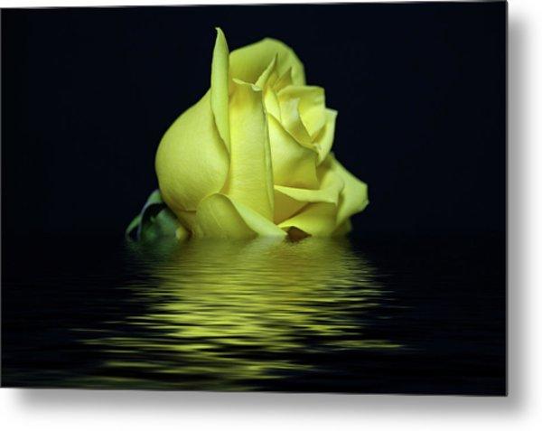 Yellow Rose II Metal Print