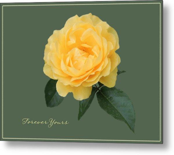 Yellow Rose Of Love Metal Print