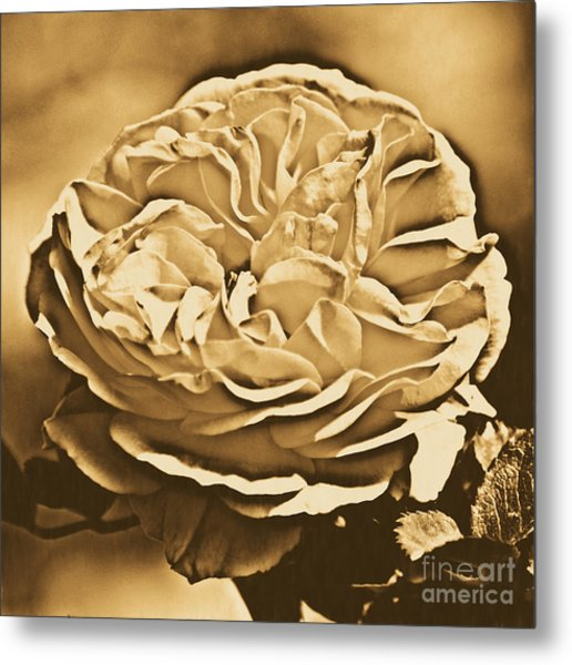 Yellow Rose Of Texas Floral Decor Square Format Rustic Digital Art Metal Print