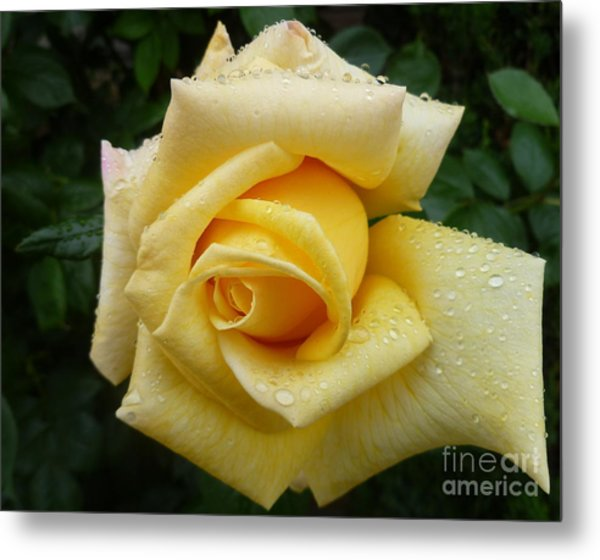 Yellow Rose Say Goodbye Metal Print