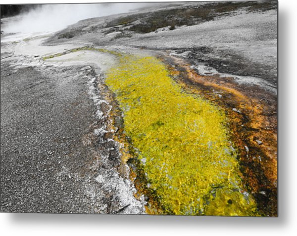 Yellow Rush Metal Print by Ritsuko Wakamatsu