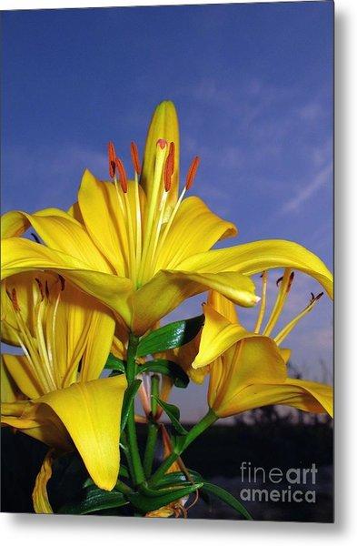 Yellow Spring  Metal Print