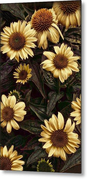 Yellow Sombrero Coneflower Metal Print