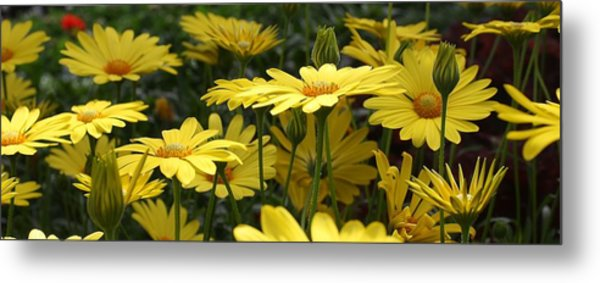 Yellow Splendor Metal Print