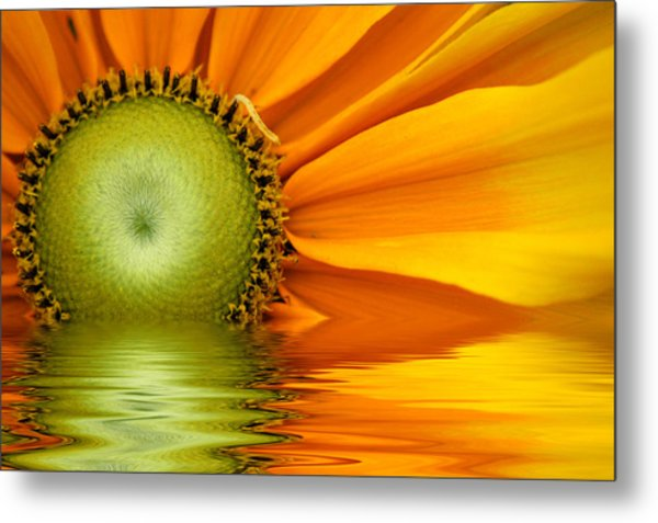 Yellow Sunflower Sunrise Metal Print